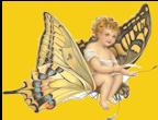 butterflycherubSM
